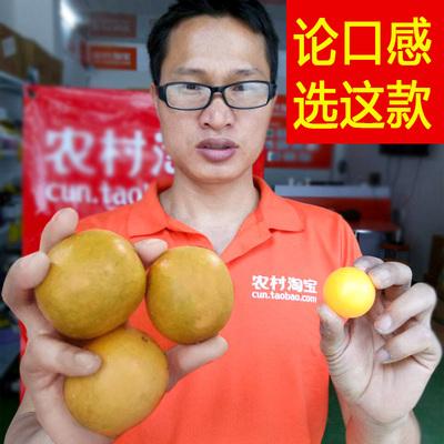散装低温脱水罗汉果包邮果干特级广西桂林永福黄金罗汉果干果批发
