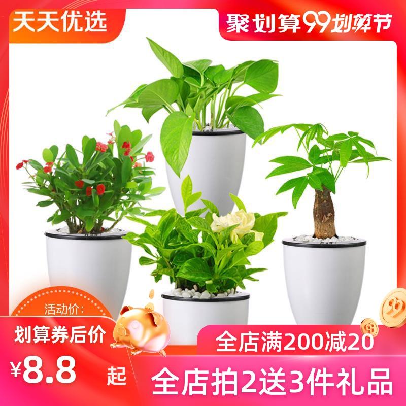 绿萝盆栽植物室内水培绿植栀子花文竹碧玉袖珍椰子发财树花卉盆栽