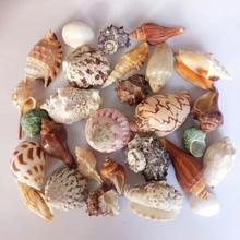 包邮天然海螺贝壳珊瑚套餐大礼包鱼缸水族装饰地台墙贴家居摆件