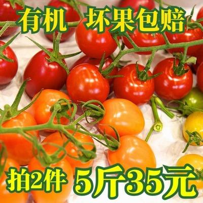 小番茄 新鲜金黄千禧圣女果水果现摘农家有机千喜西红柿纯天然3斤