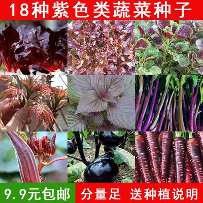 紫苏生菜苋菜红甜菜秋葵番茄紫菜苔紫甘蓝 易种盆栽紫色蔬菜种子