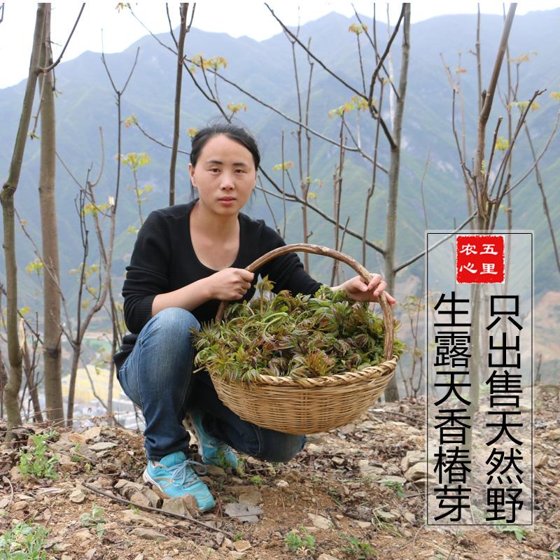 18年新鲜露天头茬红香椿野生红有机香椿芽香椿250g 野菜