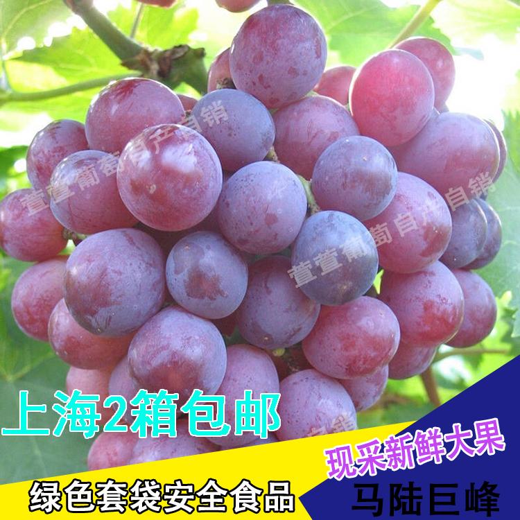 马陆葡萄 上海包邮5斤净重新鲜巨峰无籽营养绿色无公害孕妇葡萄