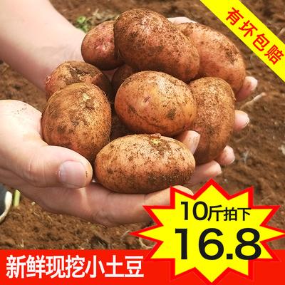 新鲜小土豆10斤农家自种蔬菜云南红皮黄心土豆批发包邮马铃薯洋芋