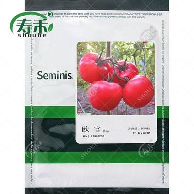 美国圣尼斯欧盾欧官欧贝番茄种子 大粉果西红柿种籽高产春播蔬菜