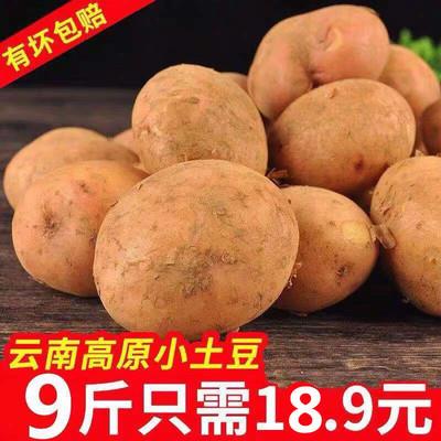 云南新鲜红皮黄?#30007;?#22303;豆马铃薯单果9斤(20克-150克)包邮