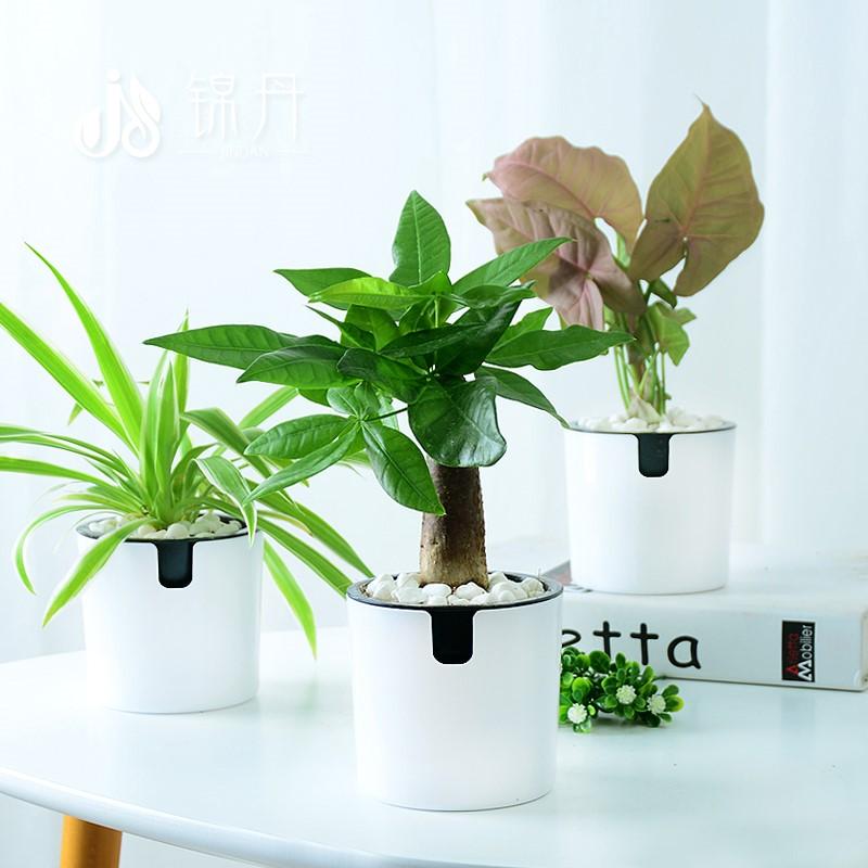 Искусственные цветы / Товары для садоводства Артикул 593404684473