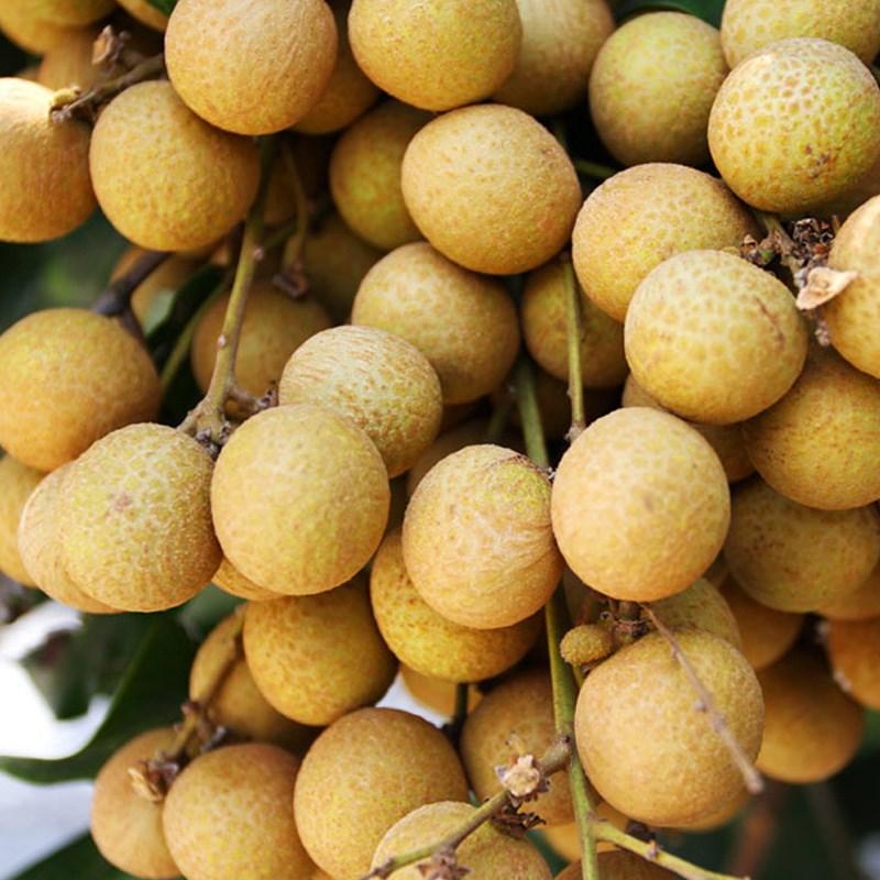 龙眼新鲜水果广西玉林特产水果桂圆龙眼新鲜5斤包邮包邮