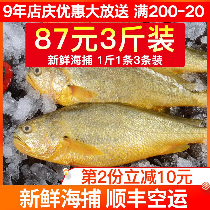 黄花鱼野生黄鱼新鲜海鱼海鲜水产海鱼鲜活冷冻海鱼深海黄花鱼生鲜