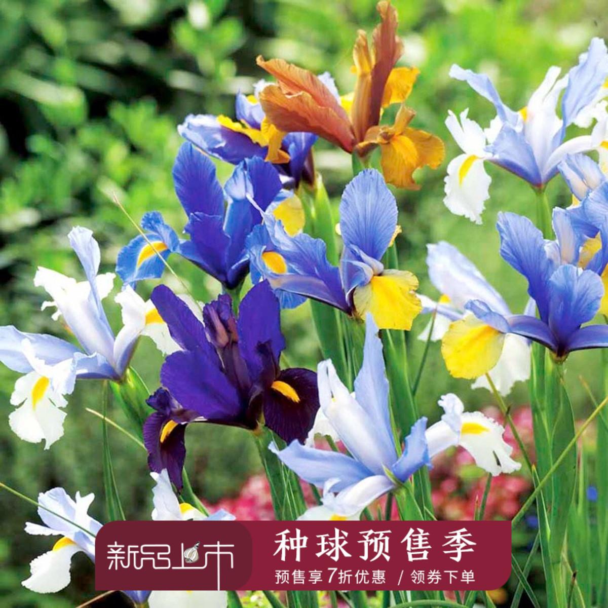 Цветочные луковицы Артикул 536082207958