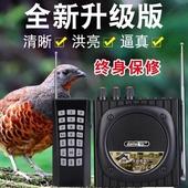 户外教鸟学叫 鸡媒 爱歌Q92捉抓电媒机远程遥控电媒引鸡神器 电煤