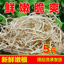 Fresh Houttuynia tender roots are now digging ear ears root fish a piece of 5 Jin.