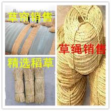 精选稻草草绳草帘干稻草适合装 修装 饰手工编织品用干净整齐无霉变