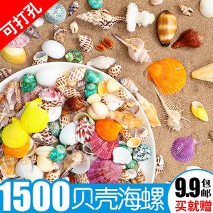 鱼缸造景珊瑚装 饰婚庆卷贝鱼寄居蟹用壳 天然贝壳海螺海星组合套装