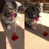 猫咪玩具吸盘老鼠逗猫棒逗猫杆耐咬磨牙猫猫小猫玩具益智宠物用品
