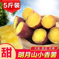 宜春明月山小香薯新鲜农家富硒小红薯现挖现卖黄心手指板栗署5斤