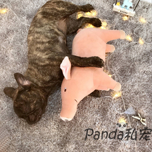 Pet dog companion accompany sleeping pig, Teddy law bullfight, vent oestrus, plush toy, big tooth toy, comfort gift.
