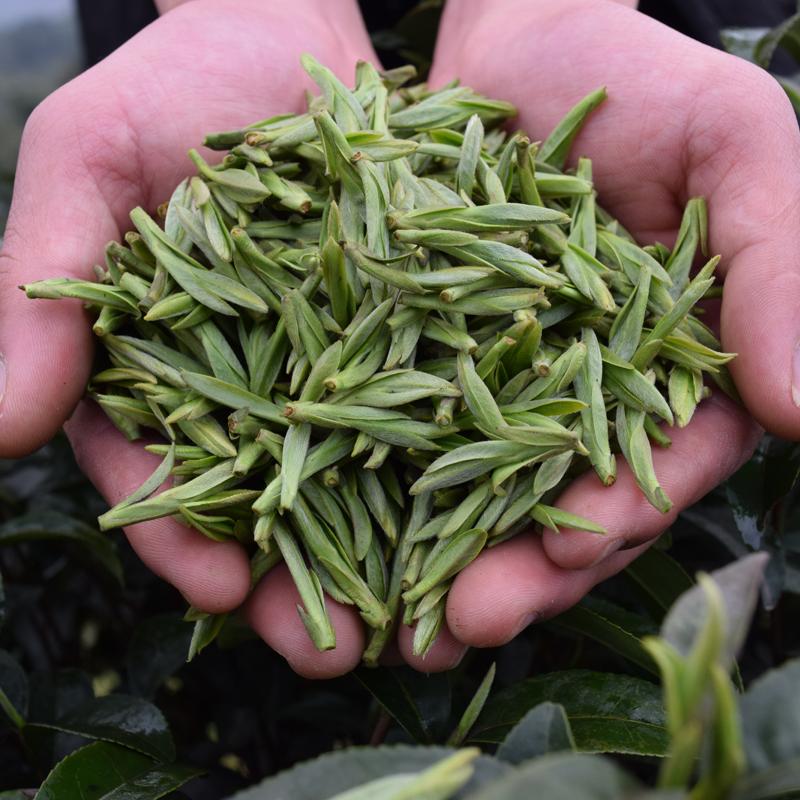 年新茶叶雀舌散装春茶叶毛尖茶嫩芽明前特级龙井茶翠芽 2018 绿茶