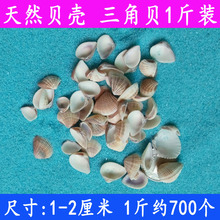 天然海螺贝壳 小黄贝 1-2厘米 三角贝幺妹 贝壳材料鱼缸地台装饰