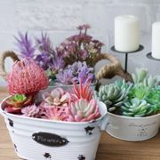 Simulation of succulents fake succulent green plant simulation flower combination potted set interior decoration ornaments home furnishings