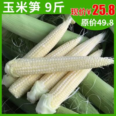 农家玉米笋现摘甜小玉米新鲜蔬菜水果生菜番麦笋食材玉米棒9斤