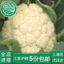 新鲜白花菜花椰菜青浦农家自种现采摘新鲜蔬菜有机种植同城配送
