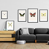 Modern minimalist butterfly specimen decoration painting living room dining room restaurant dining wall wall hanging painting creative