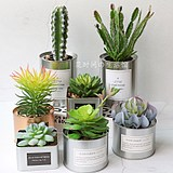 Simulated Potted Plant Set Ins Nordic Living Room Decoration Fake Flower Decoration