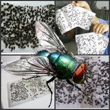 Sticky fly paper strong flies stick strips fly flies sticks small flying insects mosquitoes flies off flies