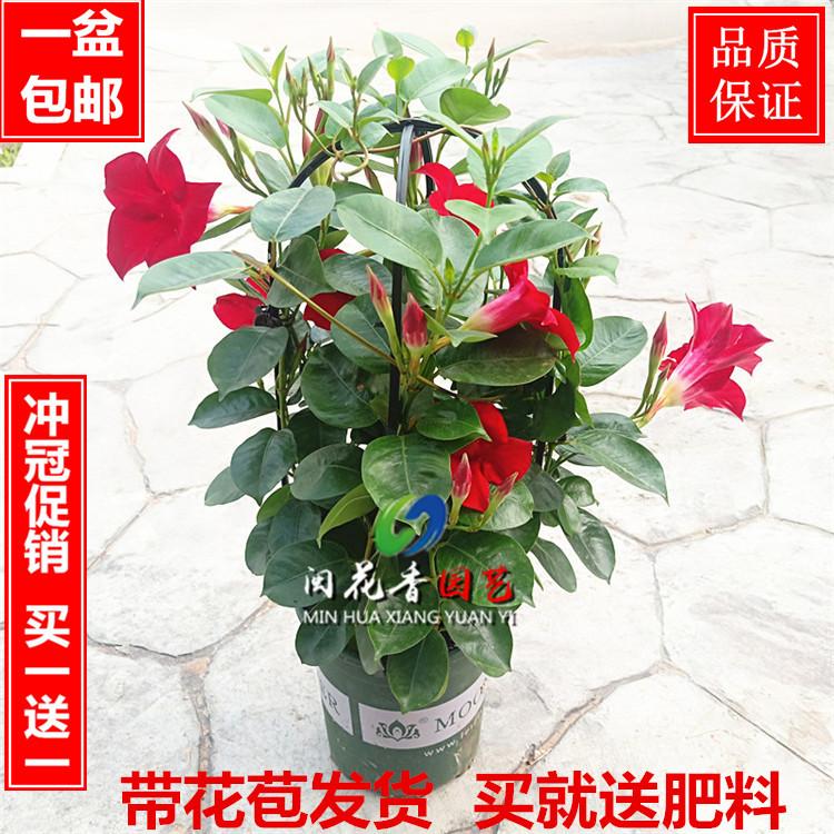 Комнатные растения Артикул 553639962484