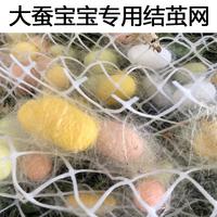 大蚕宝宝结茧上簇网 上山吐丝网方格簇养蚕工具大茧网塑料