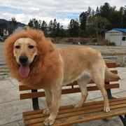 宠物搞笑狮子头套假发金毛萨摩大型犬帽子头饰狗狗变身装狮子头饰