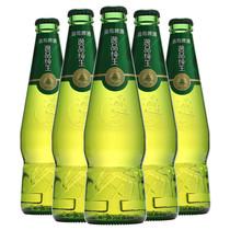瓶330mlx6高端小瓶青岛啤酒典雅复古六支装小青岛