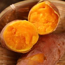 18年现挖现发新鲜红薯5斤开封沙地红薯小红薯板栗薯山芋番薯地瓜