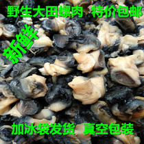 Dongting Lake farmers handmade to pick wild large conch meat fresh large Conch Meat 500g 3 Jin