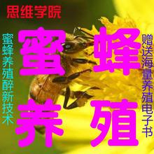 养蜂教程蜜蜂养殖技术养蜂视频蜜蜂养殖技术视频中蜂养殖资料大全