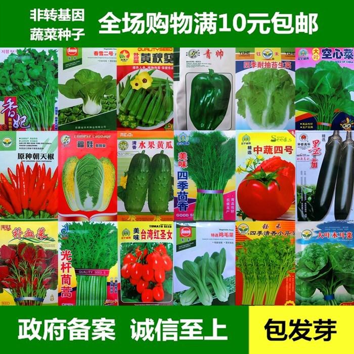 番茄蔬菜种