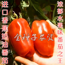 Imported Cream banana tomato seeds old varieties of fruit tomato seeds long round tomatoes taste good