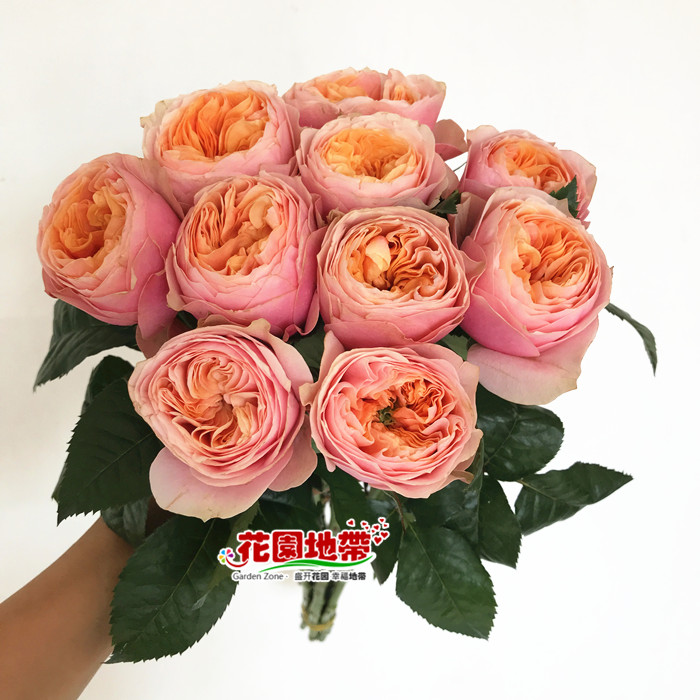 国产玫瑰花