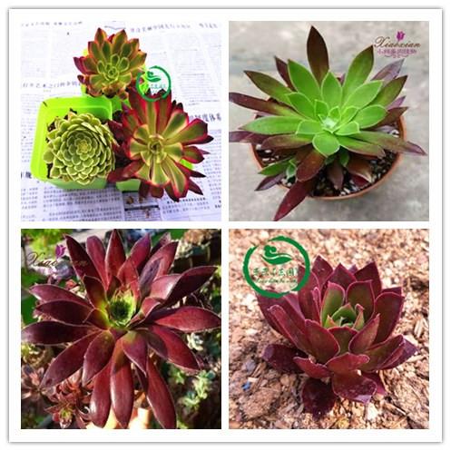 Книги о садоводстве Артикул 43810524268