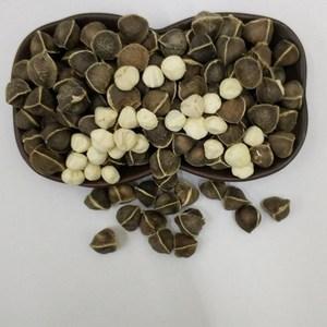 【中大粒】正宗印度进口野生食用辣木籽正品天然精选种子500g包邮
