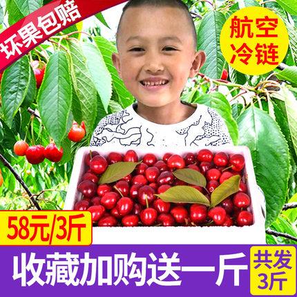 山东烟台大樱桃预售孕妇5新鲜水果殷桃国产包邮3斤装应季车厘子10