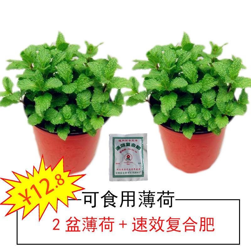 Комнатные растения Артикул 575400976665