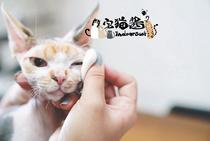 护理清洁舒缓宠物眼部清洁护理软胶cleancyber粘粘宅猫酱