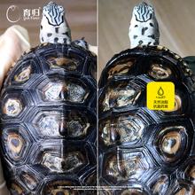 育归育龟乌龟背甲真菌腐甲烂甲花甲水龟半水陆龟快速抑制真菌20克
