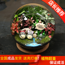 微景观植物教师节礼物盆栽迷你生态瓶星座龙猫生日礼桌面办公绿植