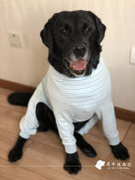 Japanese big dog pet clothes to protect joints anti-hair hair home four-legged clothes Labrador Golden Retriever