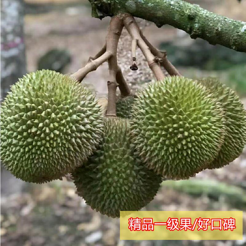 猫山王榴莲 奶香巴掌小榴莲2个装新鲜水果之王孕妇水果非马来西亚