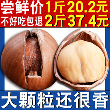 大榛子东北特产野生原味开口坚果孕妇零食铁岭榛子包邮特价500g