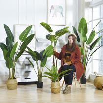 环保小件空气礼物炭雕福字工艺品摆台酒柜欧式温馨摆饰炭茶台屋里